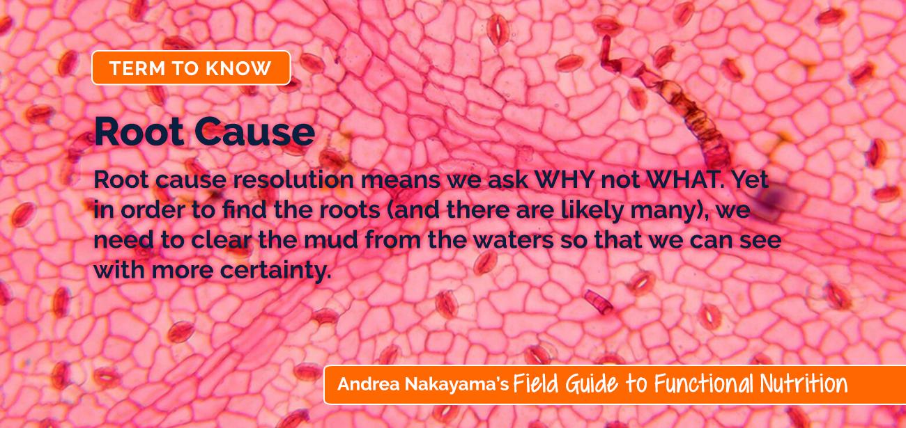 Andrea Root Cause | Andrea Nakayama's Field Guide to Functional Nutrition Field Guide to Functional Nutrition | Root Cause