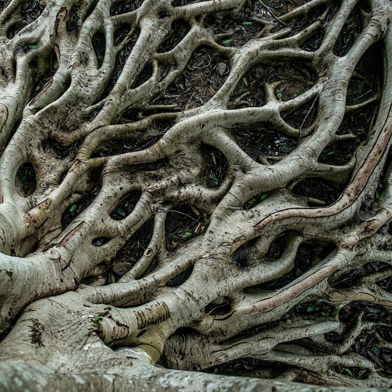 functional medicine roots